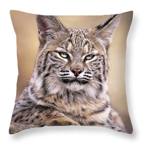 Bobcat Throw Pillow featuring the photograph Bobcat Cub Portrait Montana Wildlife by Dave Welling
