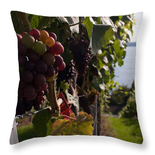Miguel Throw Pillow featuring the photograph Bodensee Vineyards by Miguel Winterpacht