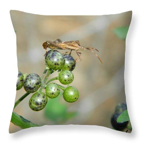Flora Throw Pillow featuring the photograph Bogues Sur Une Plante Deux by George Pedro