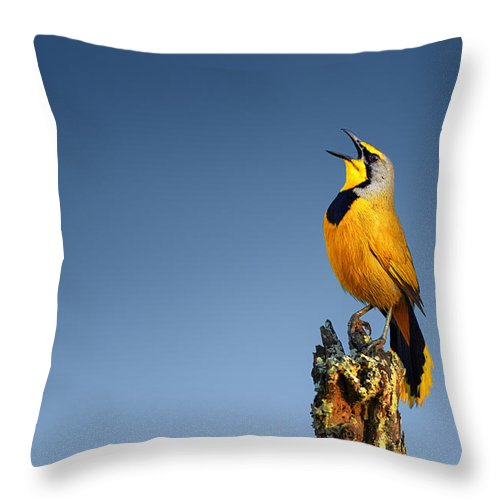 Bokmakierie Throw Pillow featuring the photograph Bokmakierie Bird Calling by Johan Swanepoel