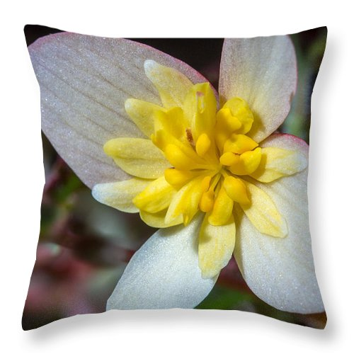 Bon Bon Sherbet Throw Pillow featuring the photograph Bon Bon Sherbet by Koji Kanemoto