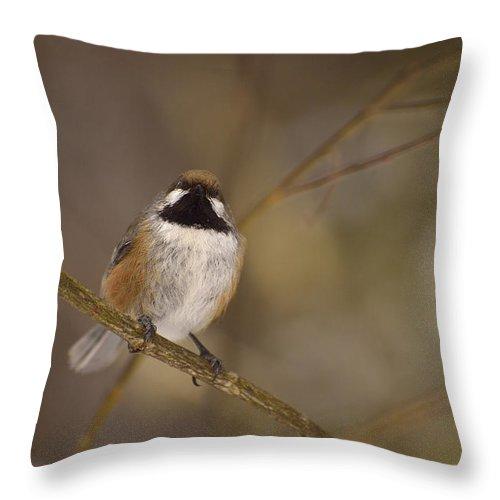 Boreal Chickadee Throw Pillow featuring the photograph Bonding Boreal by Joshua McCullough