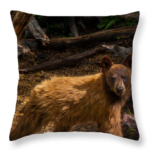 Gigimarie Throw Pillow featuring the photograph Boo Boo by Gina Herbert
