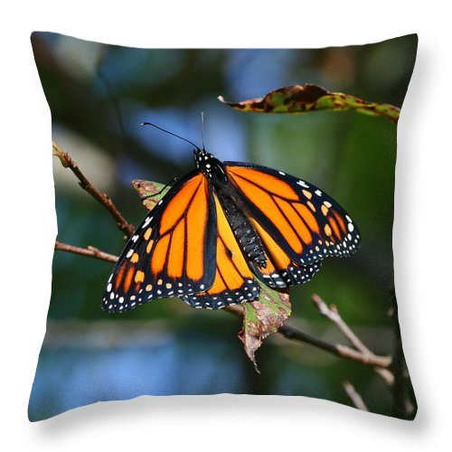 Butterflies Throw Pillow featuring the photograph Bookends by Neal Eslinger