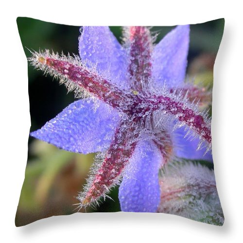 Borage Photograph Throw Pillow featuring the photograph Borage Droplets by Cynthia Wallentine