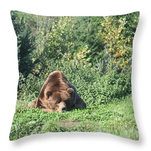 Brown Bear Throw Pillow featuring the photograph Boring by Christiane Schulze Art And Photography