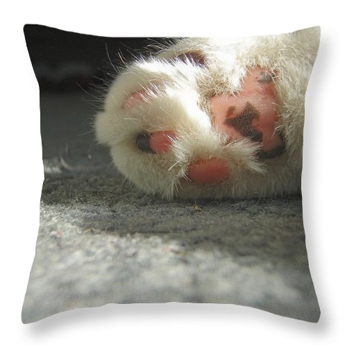 Cat Throw Pillow featuring the photograph Born To Love by Kristine Nora