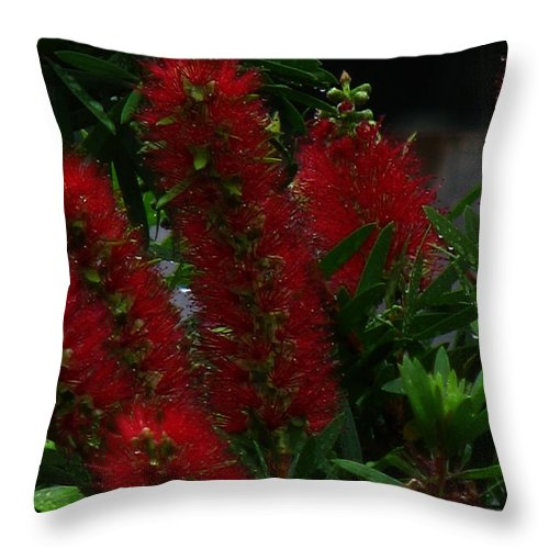Patzer Throw Pillow featuring the photograph Bottle Brush by Greg Patzer