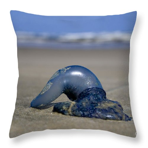 Baylys Beach Throw Pillow featuring the photograph Bottle Of Blue by Kym Clarke