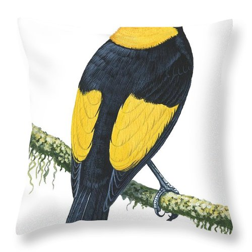 No People; Vertical; Studio Shot; Looking Away; Rear View; Full Length; Animal Themes; Nature; Wildlife; Tree; Beauty In Nature; Regent Bowerbird; Sericulus Chrysocephalus; Yellow; Bird; Perching Throw Pillow featuring the drawing Bowerbird by Anonymous