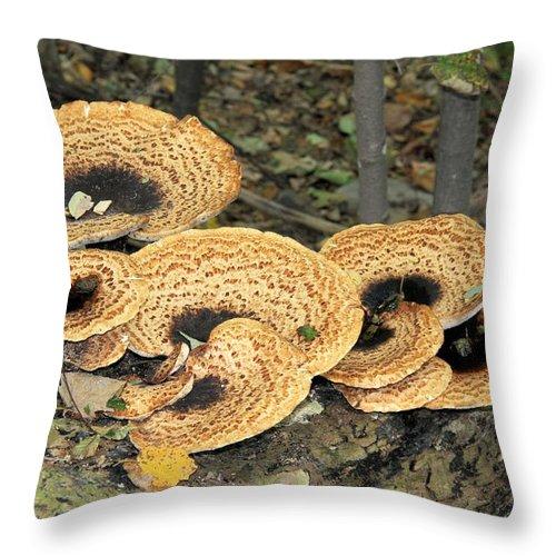 Bracket Fungi Throw Pillow featuring the photograph Bracket Fungi by Doris Potter