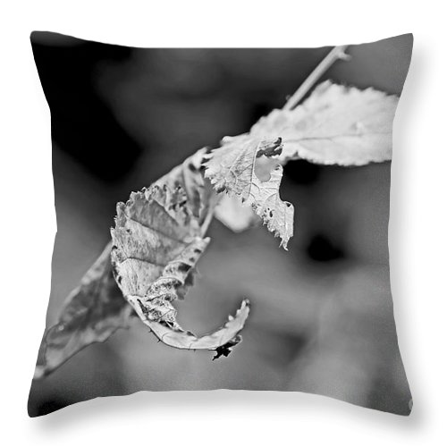 Brambles Throw Pillow featuring the photograph Bramble Leaves - Black And White by Mother Nature