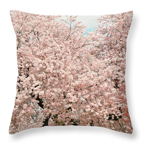 Branch Brook Park Cherry Blossoms Throw Pillow featuring the photograph Branch Brook Cherry Blossoms Iv by Regina Geoghan