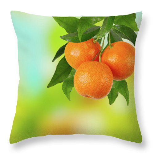 Hanging Throw Pillow featuring the photograph Branch Of Tangerines by Sashahaltam