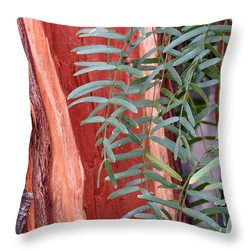 Tree Throw Pillow featuring the photograph Branches And Bark by Laurel Powell