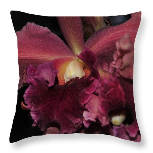 Orchid Throw Pillow featuring the photograph Brassolaeliocattleya Helen Huntington Chevy Chase by Terri Winkler