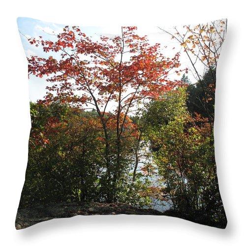 Foliage Throw Pillow featuring the photograph Break At Breakheart by Barbara McDevitt