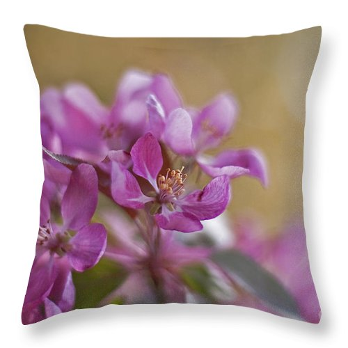 Cherry Throw Pillow featuring the photograph Breath Of Spring by Maria Ismanah Schulze-Vorberg