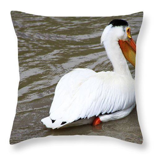 Bird Throw Pillow featuring the photograph Breeding Plumage by Alyce Taylor