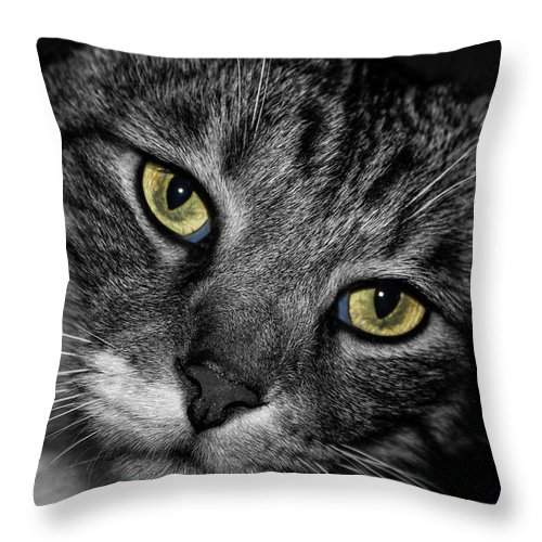 Animal Eyes Throw Pillow featuring the photograph Bright Eyes by Doug Long