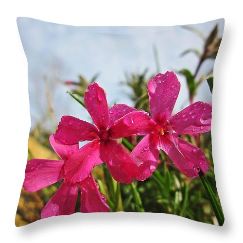 Creeping Phlox Throw Pillow featuring the photograph Bright Phlox Blooms by MTBobbins Photography