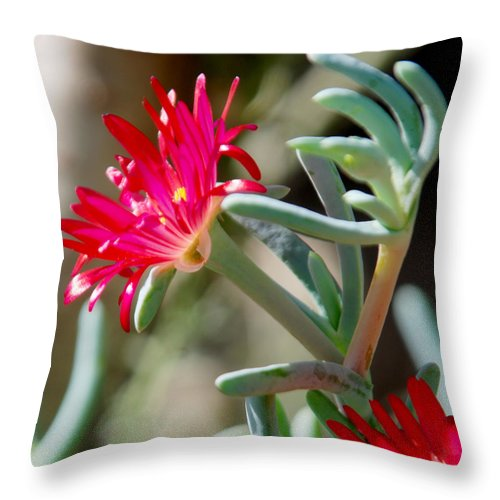Las Palmas Throw Pillow featuring the photograph Bright Pink Flower by Tracy Winter