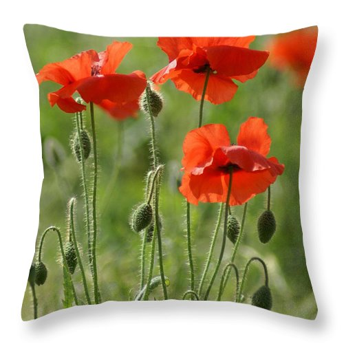 Poppies Throw Pillow featuring the photograph Bright Poppies 1 by Carol Lynch