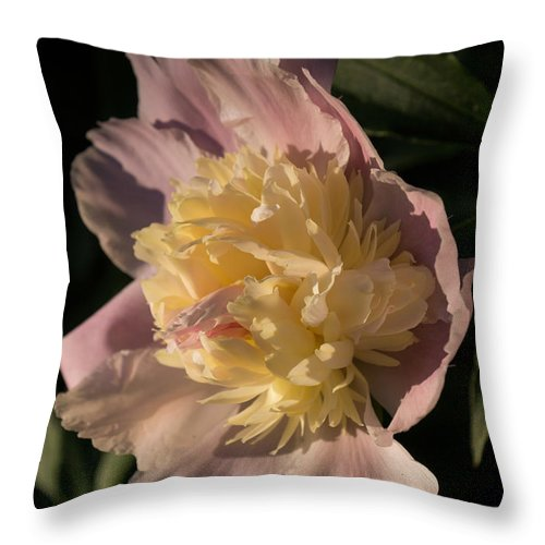 Showy Pink Peony Throw Pillow featuring the photograph Brilliant Spring Sunshine - A Showy Pink Peony From My Garden by Georgia Mizuleva