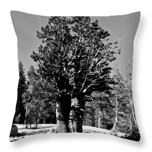 Bristlecone Pine Throw Pillow featuring the photograph Bristlecone Pine by Eric Tressler