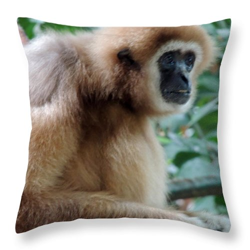 Brown Throw Pillow featuring the photograph Brown Fur by Munir Alawi