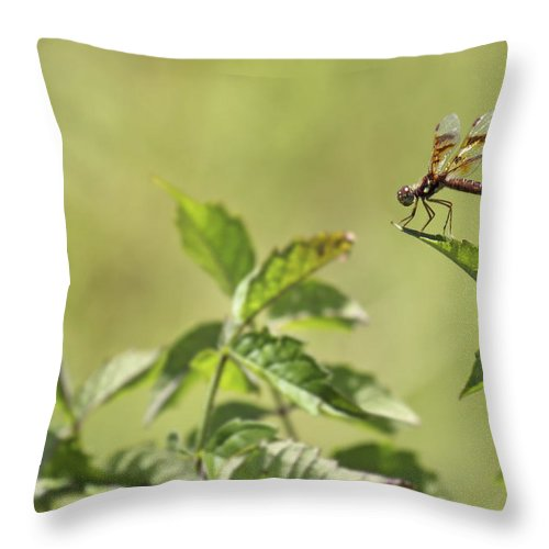Dragonfly Throw Pillow featuring the photograph Brown Hawker Dragonfly by Jason Politte