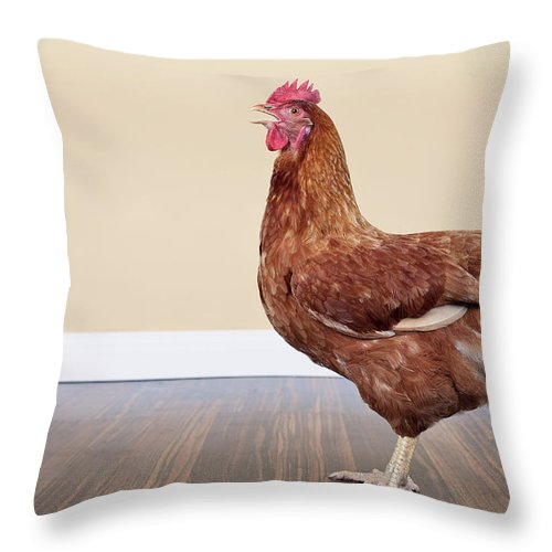 Hen Throw Pillow featuring the photograph Brown Hen by Little Brown Rabbit Photography