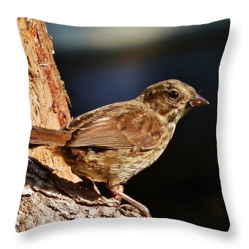 Bird Throw Pillow featuring the photograph Brown Is Beautiful by VLee Watson