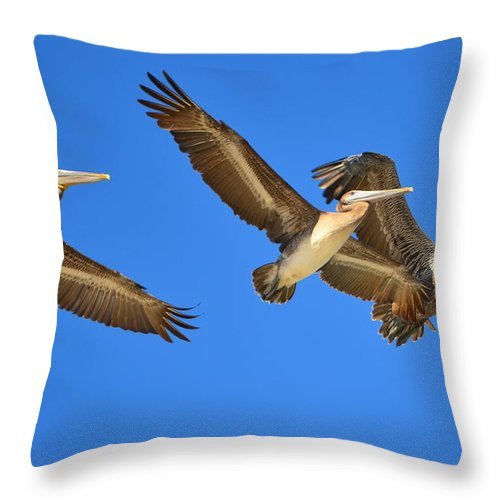 Brown Pelicans Throw Pillow featuring the photograph Brown Pelicans In Flight by Debra Martz