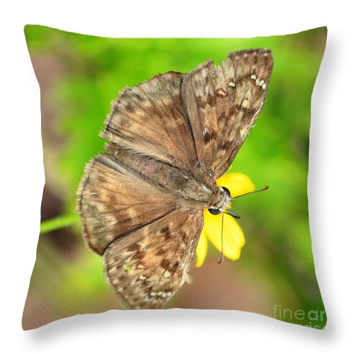 Skipper Throw Pillow featuring the photograph Brown Skipper Butterfly Square by Carol Groenen