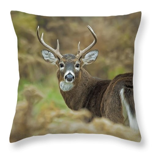 White-tailed Deer Throw Pillow featuring the photograph Buck Fever by John Vose
