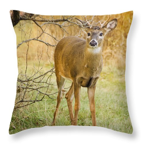 Buck Throw Pillow featuring the photograph Buck In The Brush by Peg Runyan