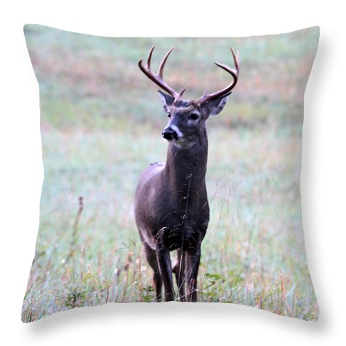 Buck Throw Pillow featuring the photograph Buck Looking For A Doe by Dwight Cook