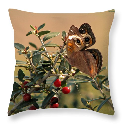 Nature Throw Pillow featuring the photograph Buckeye Beauty by Peg Urban