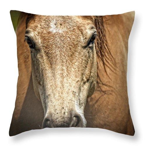 Buckskin Throw Pillow featuring the photograph Buckskin Stallion by Maggy Marsh