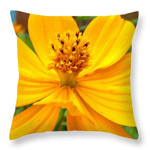 Yellow Flower Throw Pillow featuring the photograph Budding Bouquet by Kelly Holm