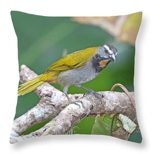 Nature Throw Pillow featuring the photograph Buff-throated Saltador by Mike Dickie