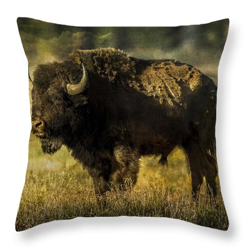 Bison Throw Pillow featuring the photograph Buffalo 2 by Lou Novick