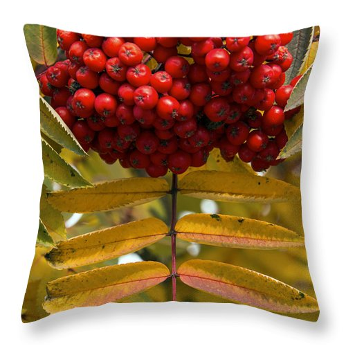 Canmore Canada Tree Trees Fall Color Autumn Colors Leaf Leaves Buffalo Berry Berries Fruit Fruits Throw Pillow featuring the photograph Buffalo Berries by Bob Phillips