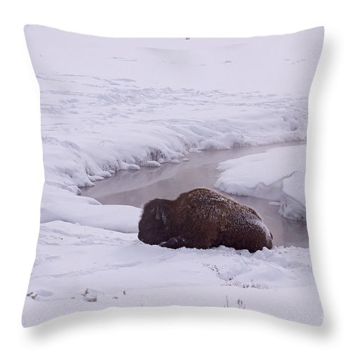 Buffalo Throw Pillow featuring the photograph Buffalo In Snow  #6143 by J L Woody Wooden