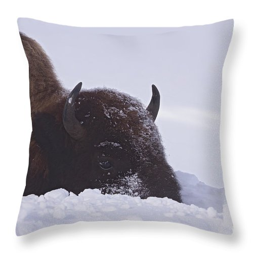 Buffalo Throw Pillow featuring the photograph Buffalo In Snow  #6920 by J L Woody Wooden
