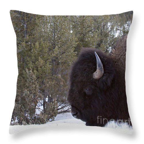 Buffalo Throw Pillow featuring the photograph Buffalo In The Mountain  #4169 by J L Woody Wooden