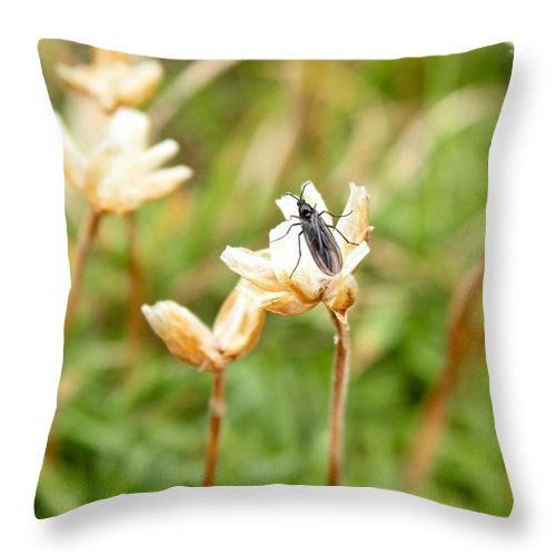 Bug Throw Pillow featuring the photograph Bug On White Flower by Stephanie Beller