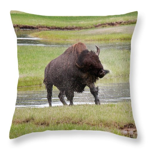 Bison Throw Pillow featuring the photograph Bull Bison Shaking In Yellowstone National Park by Fred Stearns
