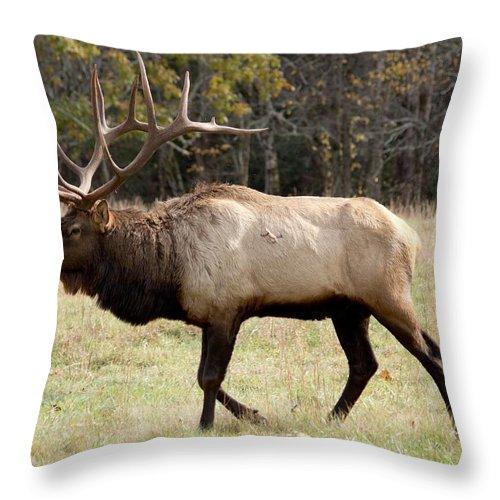 Elk Throw Pillow featuring the photograph Bull Elk by Al Gleason